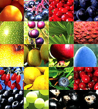 19fruits.png